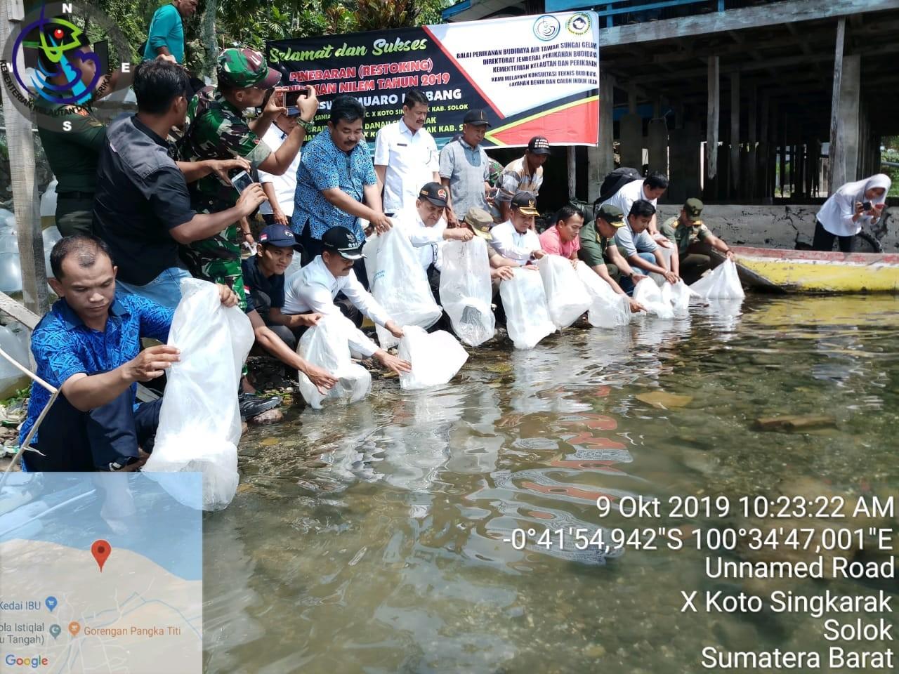 Penebaran(Restoking) Benih Ikan Nilem Tahun 2019  di Nagari Saniang Baka kec. X Koto Singkarak